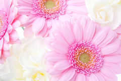 Flower background. With pink gerberas and white freesias Royalty Free Stock Photo