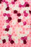 Flower background pink royalty free stock photography
