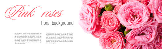 Flower background with pink roses, isolated Stock Photo