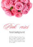 Flower background with pink roses, isolated Royalty Free Stock Photography
