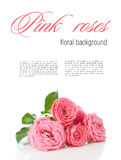 Flower background with pink roses, isolated Royalty Free Stock Photo