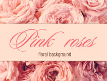 Flower background with pink roses Royalty Free Stock Image