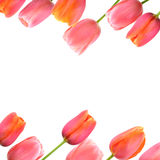 Flower background with pink tulips border. Pink tulips spring flower background with copy space royalty free stock images