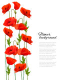 Flower background with poppies. Stock Photos