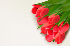 Flower background with red tulips and sample text. Royalty Free Stock Images