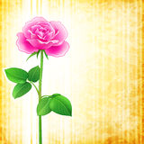 Flower background - rose Royalty Free Stock Image