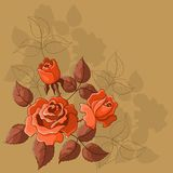 Flower background, roses. Flower beautiful  background, roses, flowers and leaves Stock Images