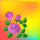 Flower background, roses. Flower beautiful  background, roses, flowers and leaves Royalty Free Stock Photo