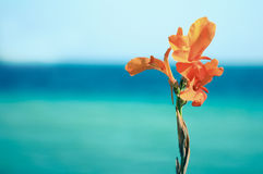 Flower on a background of sea. Orange flower on a background of sea and sky Stock Photos