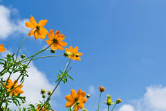 Flower background and sky Stock Photos
