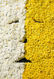Flower background. Background of small beautiful flowers Stock Image