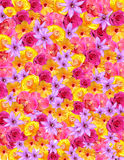Flower Background for Spring & Easter. Floral background composed of multi-colored flowers including roses. Suitable for Easter, May Day, Valentines Day or stock photo