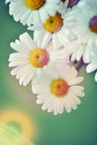 Flower background with sun rays and colour filters Stock Photos