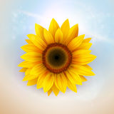 Flower Background Stock Images