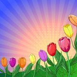 Flower background, tulips. Flower  background, tulips flowers and leaves and sun rays Royalty Free Stock Photos