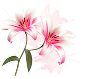 Flower Background With Two Beautiful Lilies. Stock Photography