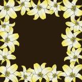 Flower background Royalty Free Stock Image