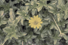 Flower background vintage Royalty Free Stock Photography