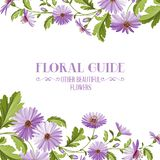 Flower background with violet flowers. Royalty Free Stock Images