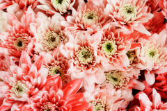 The flower background wallpaper Royalty Free Stock Photo