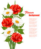 Flower Background With White Daisy and Red Roses. Stock Photography
