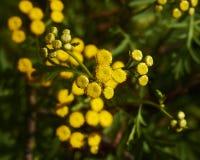Flower Background. Yellow Flower Background in a green garden Stock Photos