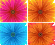 Flower Backgrounds. Abstract decorative colorful festive new year and christmas floral background Royalty Free Stock Photo