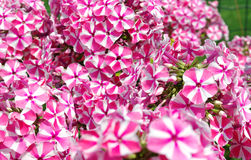 Flower bad. Royalty Free Stock Photos