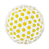 Flower ball Stock Images