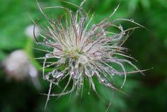 Flower ball Stock Images