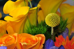 Flower ball. Macro flower ball with assorted flowers royalty free stock images