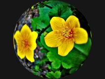 Flower ball Royalty Free Stock Image