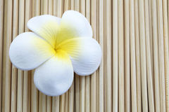 Flower on bamboo Stock Photo
