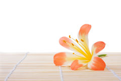 Flower on bamboo Royalty Free Stock Image