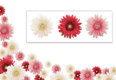 Flower banner. Pink, red and white daisy banner with the 3 flowers used attached.  Mind that the flowers are artificial Stock Photo