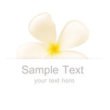 Flower in banner Stock Images