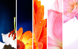 Flower banner. Collection of flower banner. macro Stock Photo