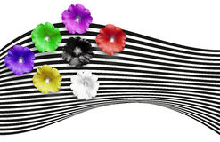 Flower banner. Multicolored flowers on the striped background. Green, black, white, red,pink, violet yellow, flowers. Mallow.. You Stock Image