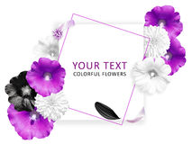 Flower banner. Pink, white black flowers on the white background. Place for text. Mallow, Rudbeckia flowers. Fashion background. Stock Image