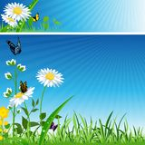Flower Banner Royalty Free Stock Photo