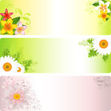 Flower Banner. Vector  Stock Photography
