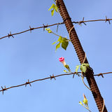 Flower on the barbed wire Stock Images