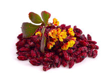 Flower of a barberry and dried fruits Stock Photography