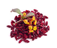 Flower of a barberry and dried fruits. Royalty Free Stock Images
