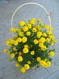 Flower basket. The wooden present basket with yellow flowers Royalty Free Stock Image