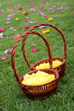 Flower basket Royalty Free Stock Image