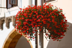 Flower basket. Full of red flowers on the street light in historical city center royalty free stock images