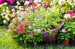 Flower in the basket Stock Image
