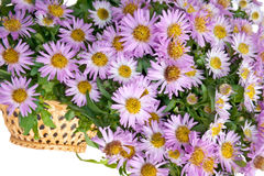 Flower in a basket. A floral bouquet is in a wooden basket Stock Images
