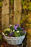 Flower Basket Stock Photography